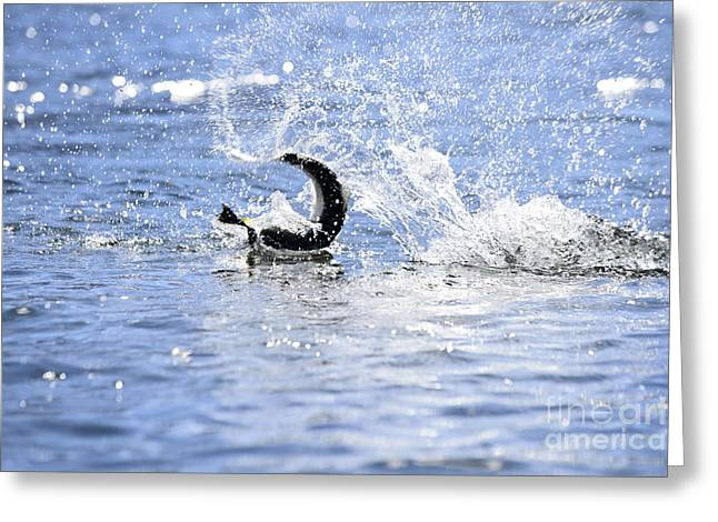 Rainbow Trout Greeting Cards - Fish On Greeting Card by Chip Laughton