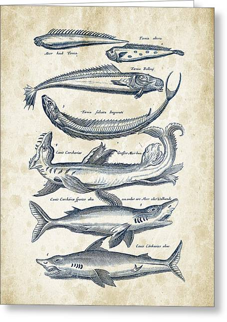 Shark Digital Art Greeting Cards - Fish Species Historiae Naturalis 08 - 1657 - 06 Greeting Card by Aged Pixel