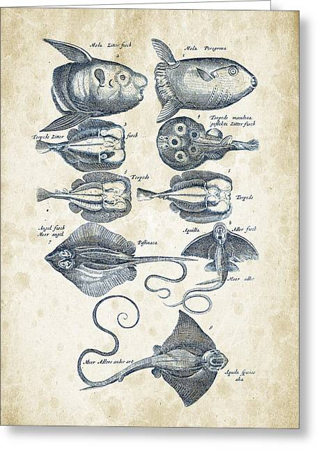 Fish Digital Art Greeting Cards - Fish Species Historiae Naturalis 08 - 1657 - 09 Greeting Card by Aged Pixel