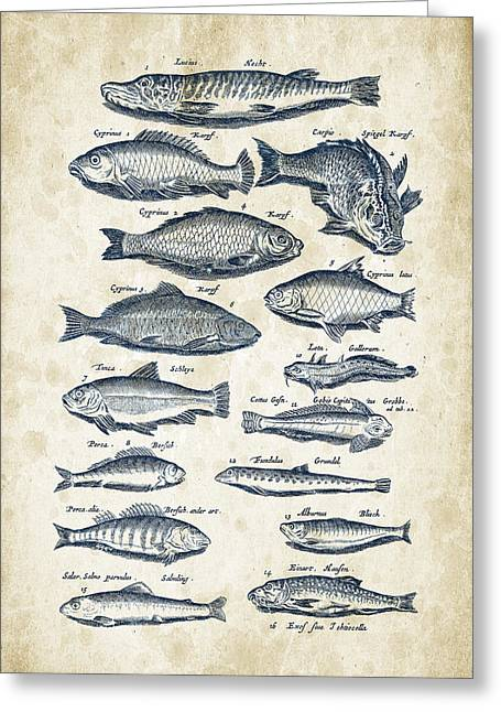 Fish Digital Greeting Cards - Fish Species Historiae Naturalis 08 - 1657 - 29 Greeting Card by Aged Pixel