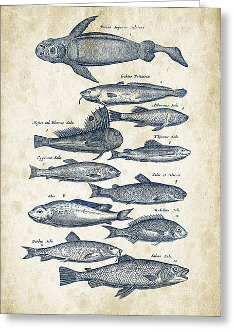 Fish Digital Greeting Cards - Fish Species Historiae Naturalis 08 - 1657 - 31 Greeting Card by Aged Pixel