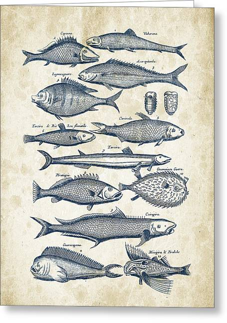 Fish Digital Art Greeting Cards - Fish Species Historiae Naturalis 08 - 1657 - 33 Greeting Card by Aged Pixel