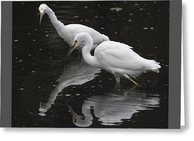 Nature Greeting Cards - Fishin Greeting Card by Bruce Frye