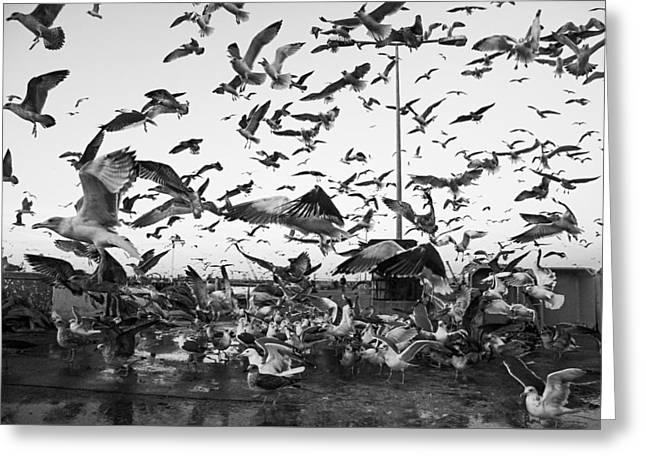 Flying Seagull Greeting Cards - Fishing Dock Greeting Card by Joao Bizarro