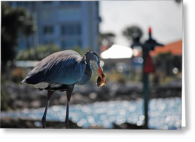 Gray Heron Greeting Cards - Fishing Greeting Card by Robert Meanor