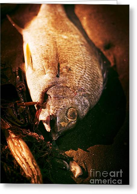 Contaminated Greeting Cards - Fishy Find Greeting Card by Ryan Jorgensen