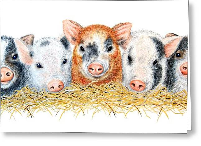 Baby Animal Drawings Greeting Cards - Five Little Pigs Greeting Card by Sandra Moore