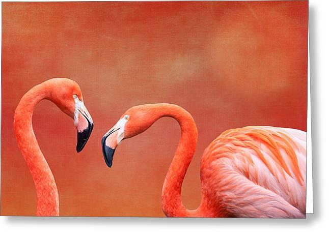 Water Fowl Greeting Cards - Flamboyant Flamingos Greeting Card by Tom Mc Nemar