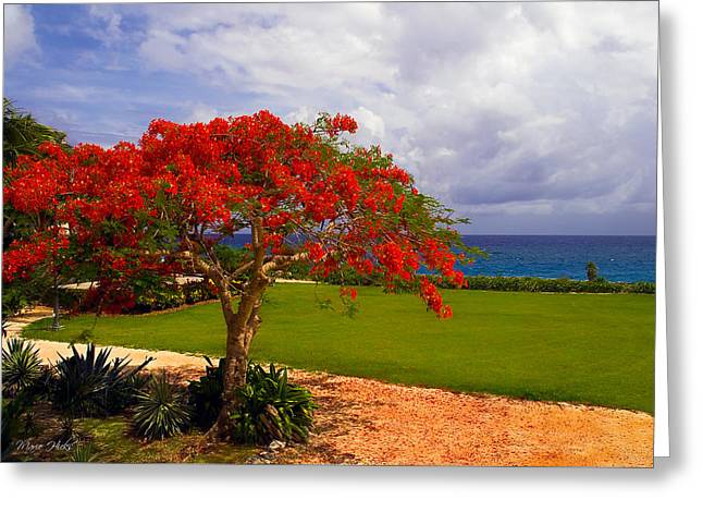 Flamboyant Tree In Grand Cayman Greeting Card by Marie Hicks