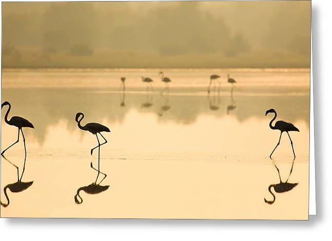 Flamingos Greeting Cards - Flamencos Greeting Card by Martin Zalba