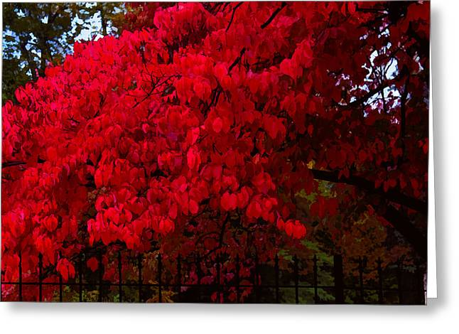 Flames Of Autumn Greeting Card by Susan Vineyard