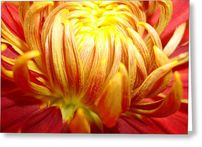 Floral Artwork Greeting Cards - Flaming Greeting Card by Kathy Bucari