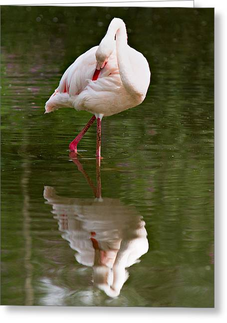 Alone Greeting Cards - Flamingo Greeting Card by Gert Lavsen