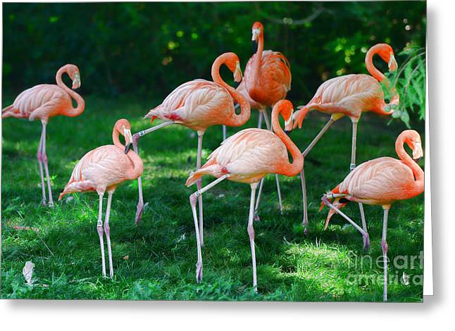 Greater Flamingos Greeting Cards - Flamingo Greeting Card by Paul Ward