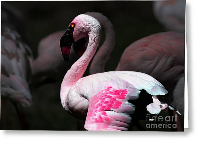 Flamingo Greeting Card by Wingsdomain Art and Photography