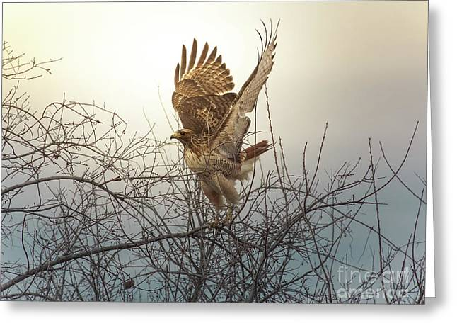 Red-tailed Hawk Greeting Cards - Flashing The Truckers Greeting Card by Robert Frederick