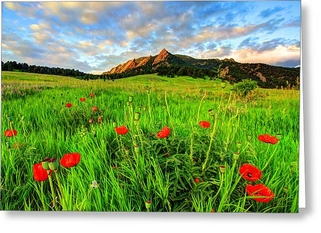 Fort Collins Photographs Greeting Cards - Flatiron Poppies Greeting Card by Scott Mahon