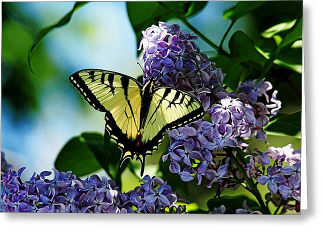 Flaunting The Tiger Stripes Greeting Card by Debbie Oppermann