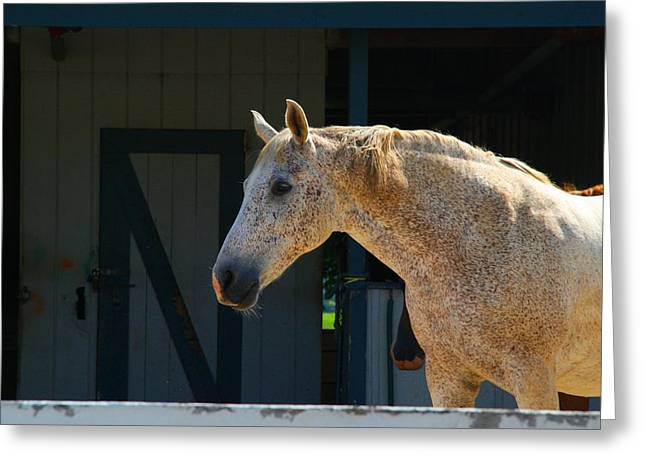 Kentucky Horse Park Photographs Greeting Cards - Flea-Bitten Appaloosa Greeting Card by Kathryn Meyer