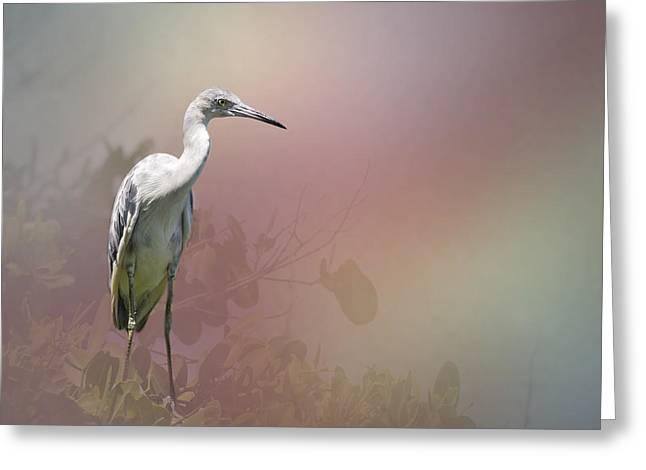 Modern Photographs Greeting Cards - Fledgeling Egret by Darrell Hutto Greeting Card by Darrell Hutto