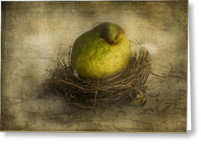 Just Greeting Cards - Fledgling Pear Greeting Card by Constance Fein Harding