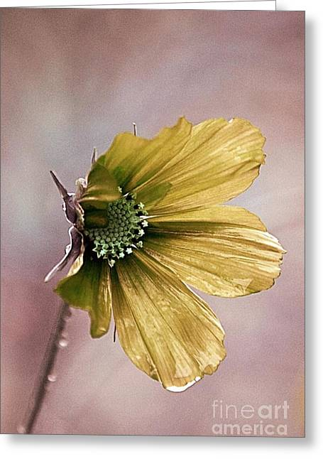 Fleurina 02 - 14b Greeting Card by Variance Collections