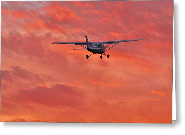 Liberation Greeting Cards - Flew Off Into the Sunset Greeting Card by Steven Maxx