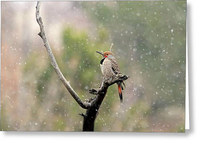Flicker In The Rain Greeting Card by Donna Kennedy