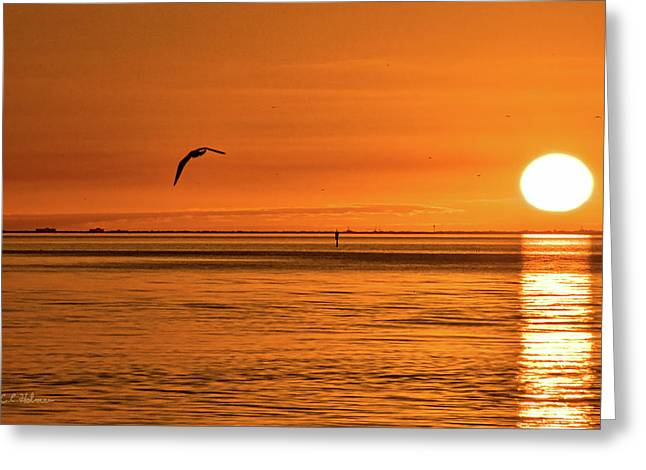 Flight At Sunset Greeting Card by Christopher Holmes