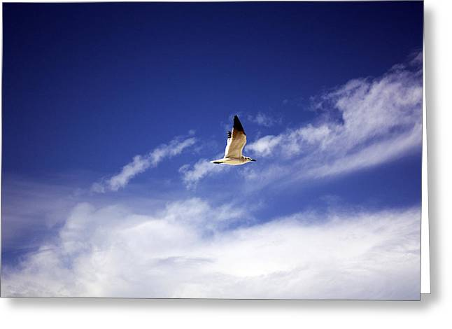 Flying Seagull Greeting Cards - Flight in the Blue Sky Greeting Card by Kristen Vota