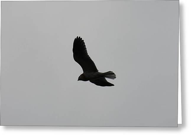 Kite Greeting Cards - Flight Greeting Card by Michael Fischer