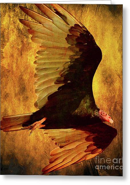 Flight Of A Vulture . Texture . 40d8879 Greeting Card by Wingsdomain Art and Photography