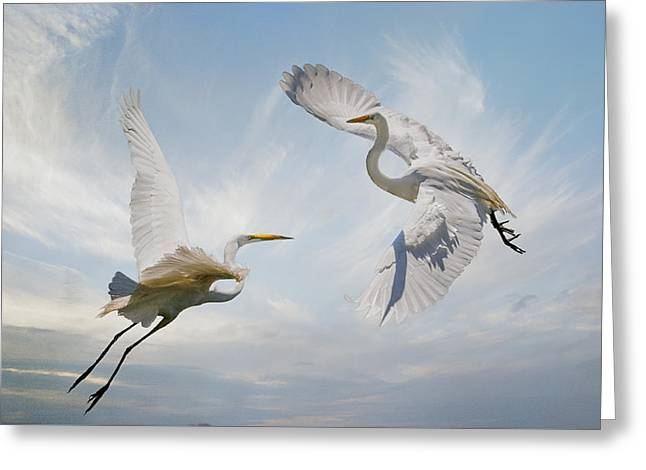 White Photographs Greeting Cards - Flight of Fancy Greeting Card by Brian Tarr