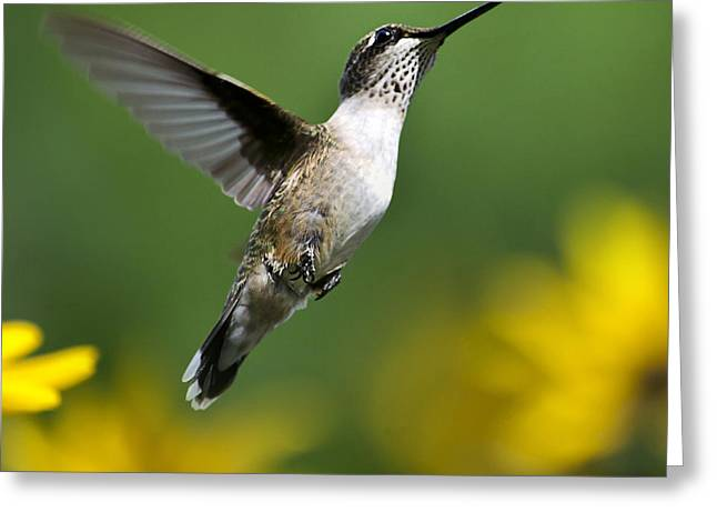 Hovering Greeting Cards - Flight of Fancy Hummingbird Square Greeting Card by Christina Rollo