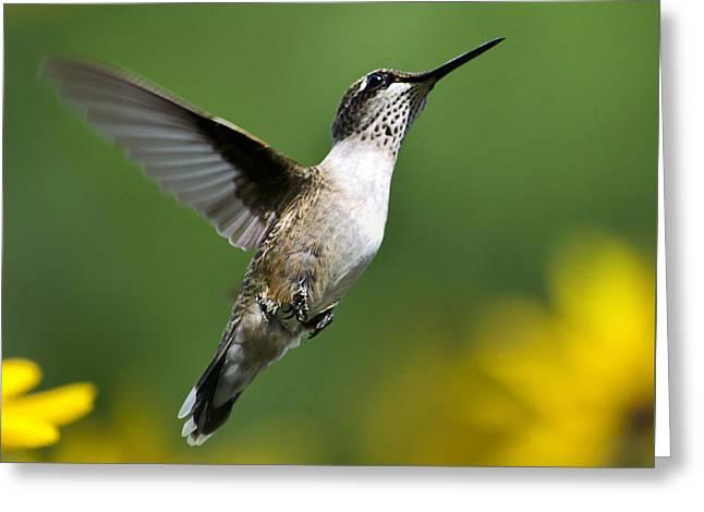 Flight Of Fancy Hummingbird Square Greeting Card by Christina Rollo
