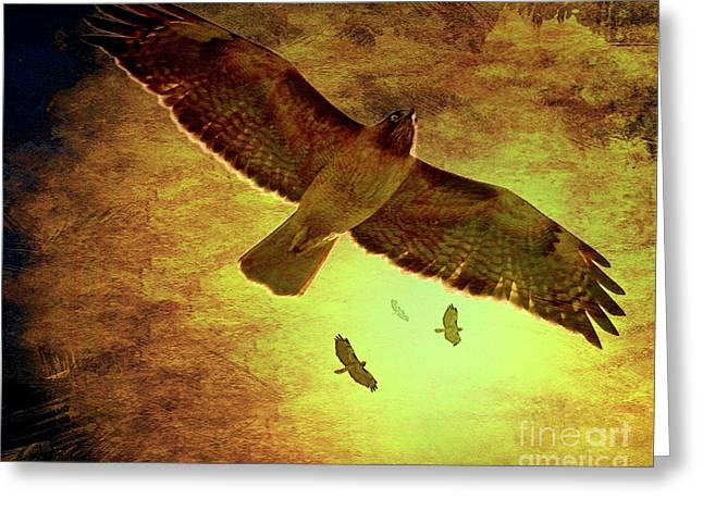 Flight Of The Golden Hawks . 7d5066 Greeting Card by Wingsdomain Art and Photography
