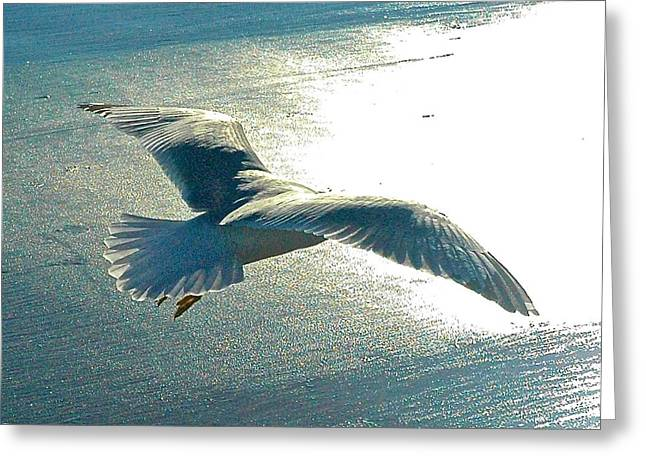 Flying Seagull Greeting Cards - Flight of the Seagull  Greeting Card by Danielle Sigmon