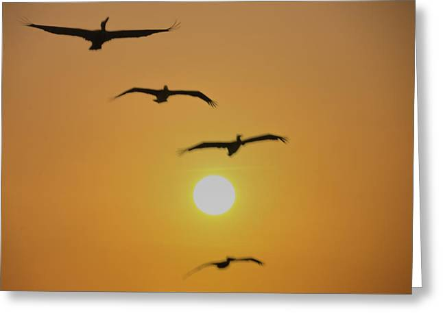Bill Cannon Photography Greeting Cards - Flight Plan Greeting Card by Bill Cannon