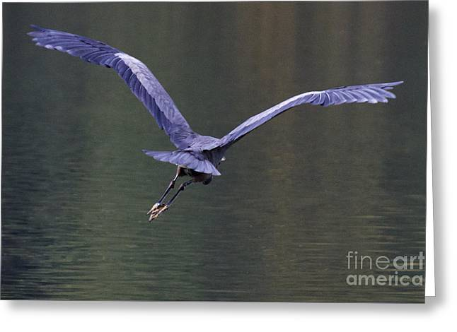Flight Greeting Card by Sean Griffin