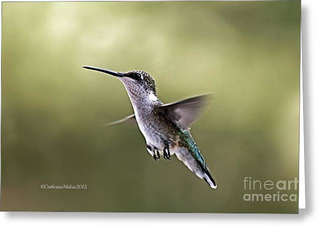 Hovering Greeting Cards - Flighty Greeting Card by Catherine Melvin