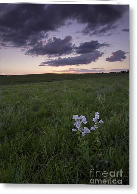 Flower Blossom Greeting Cards - Flint Hills, Kansas Greeting Card by Kenneth M. Highfill