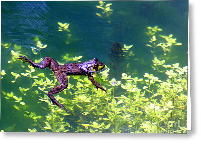 Frogs Photographs Greeting Cards - Floating Frog Greeting Card by Nick Gustafson