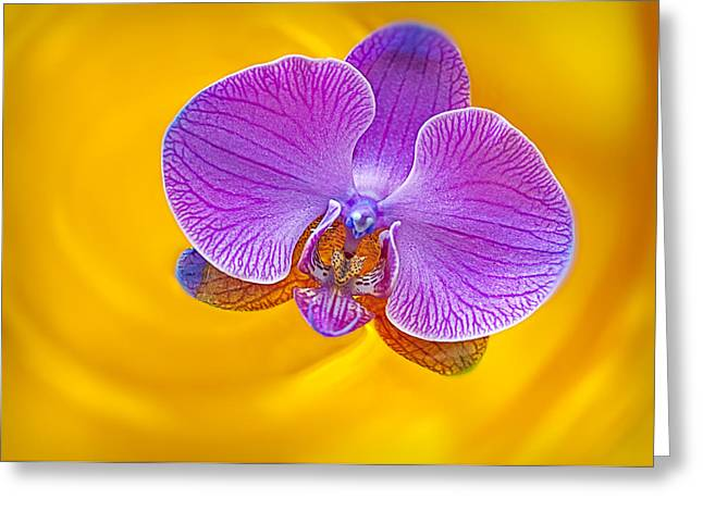 Afloat Greeting Cards - Floating Orchid Greeting Card by Susan Candelario