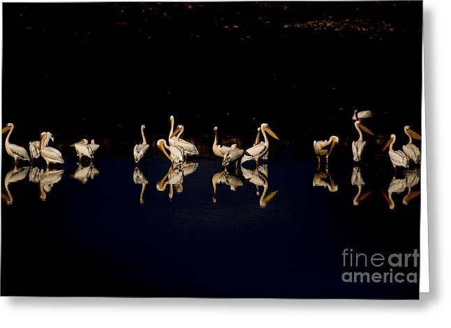 Cooperation Greeting Cards - Flock of pelicans at night Greeting Card by Alon Meir