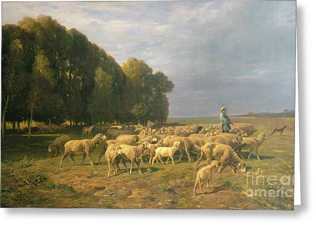 Farmers Field Greeting Cards - Flock of Sheep in a Landscape Greeting Card by Charles Emile Jacque