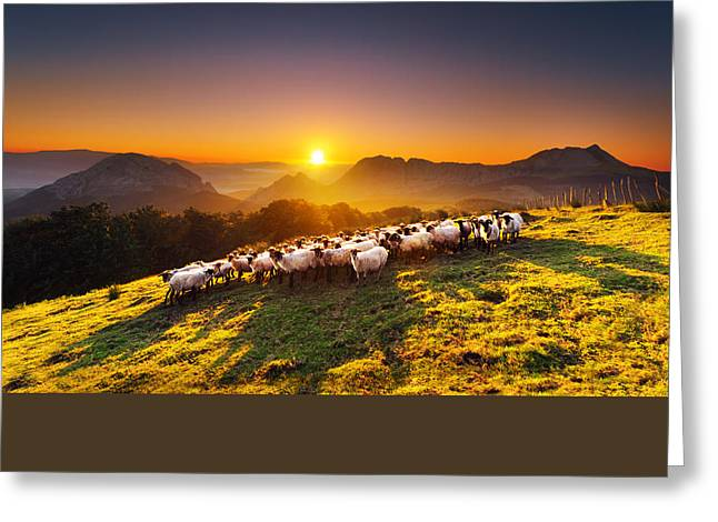 Mountain Valley Greeting Cards - flock of sheep in Saibi mountain Greeting Card by Mikel Martinez de Osaba