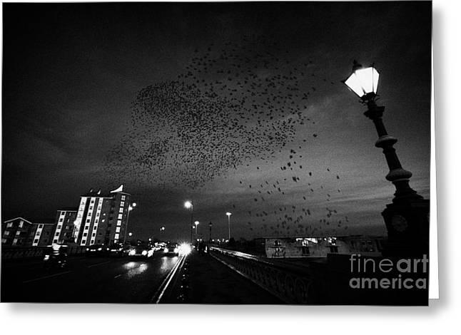 Flock Of Starlings Flying In Murmuration Over Lamp On Albert Bridge Belfast Northern Ireland Uk Greeting Card by Joe Fox
