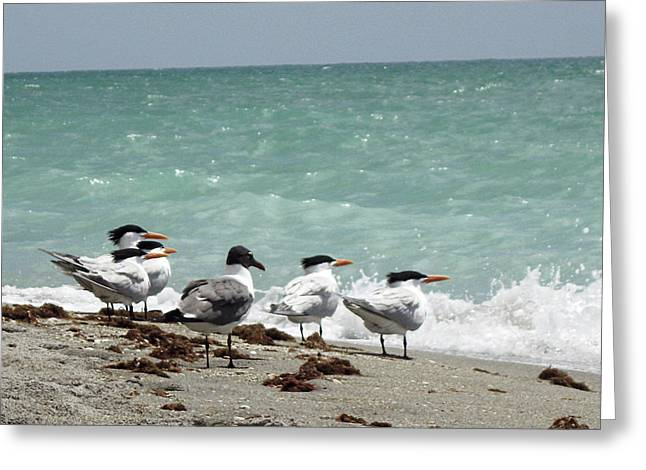 Tern Greeting Cards - Flock of Terns GP Greeting Card by Chris Andruskiewicz