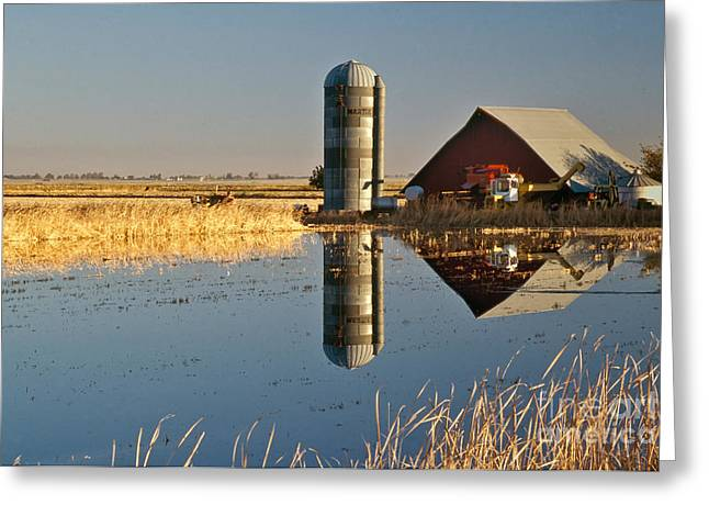Flooded Rice Field Greeting Card by Inga Spence