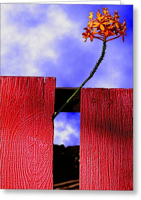 Gaphic Greeting Cards - Flora and The Red Fence Greeting Card by Paul Wear